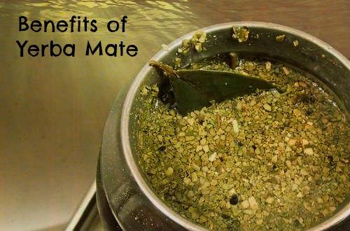 Yerba Mate and Benefits